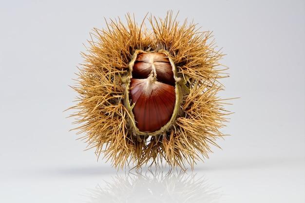 Fruta marrom redonda na mesa branca