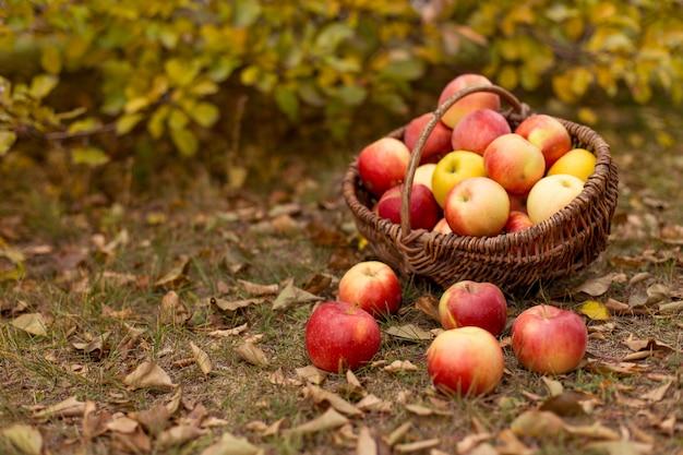 Fruta orgânica no jardim