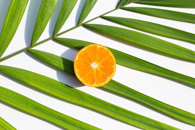 Frutas e folhas de laranja