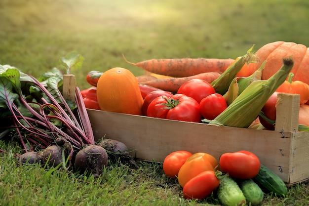 Frutas e vegetais multicoloridos na cesta