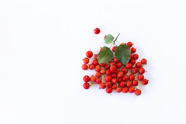 Frutas frescas de espinheiro em fundo branco