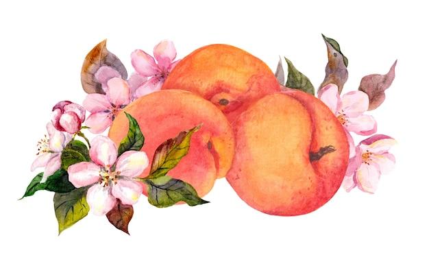 Frutos de alperce e flores em flor. cor de água