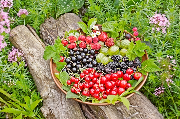 Frutos de baga misturados