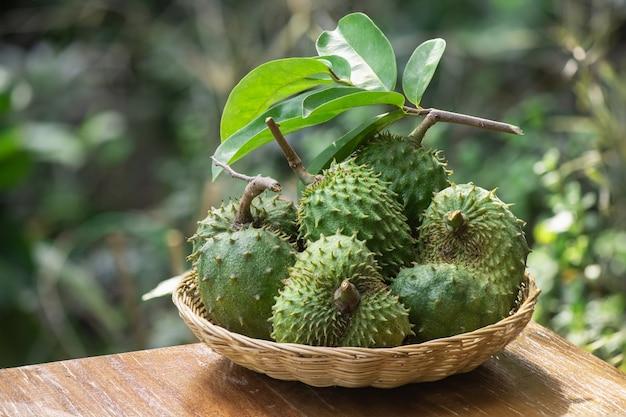 Frutos de graviola ou annona muricata na natureza.