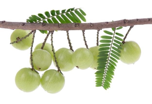 Frutos de groselha indiana isolados em uma superfície branca.