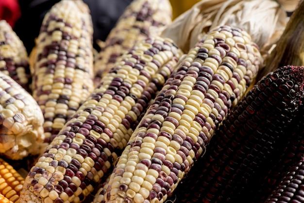 Frutos de milho no fundo da natureza.