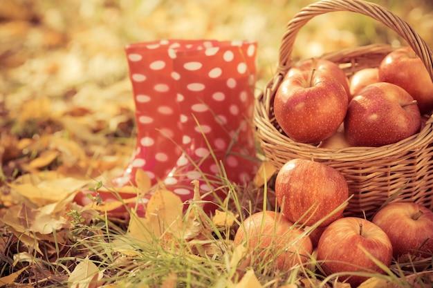 Frutos de outono ao ar livre. cesta de maçãs vermelhas. conceito de feriado de ação de graças