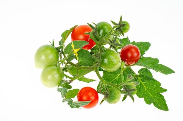 Frutos de tomates cereja verdes verdes e vermelhos em fundo branco.