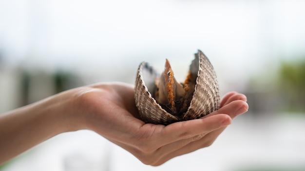 Frutos do mar de amêijoas grandes na mão da mulher, amêijoas ou marisco fresco de vieira.