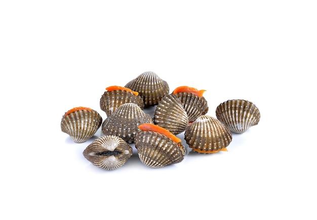 Frutos do mar de berbigão fresco em branco