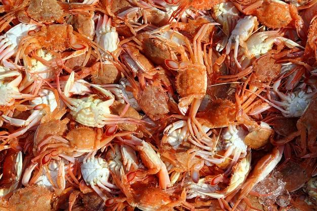 Frutos do mar de caranguejo vermelho mediterrâneo