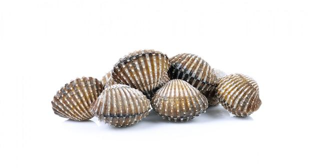 Frutos do mar frescos berbigão