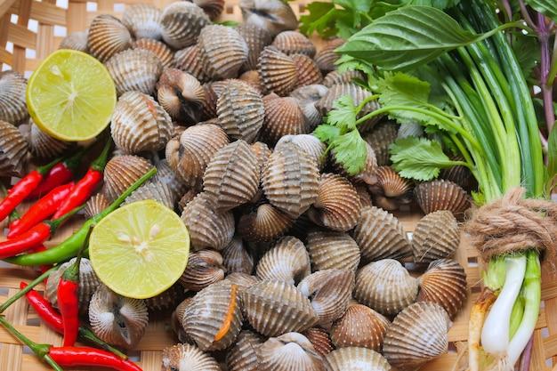 Frutos do mar frescos cockles