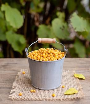 Frutos maduros de espinheiro em um balde. vitamina saudável outono bagas