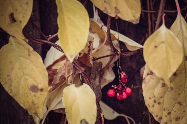Frutos maduros no outono