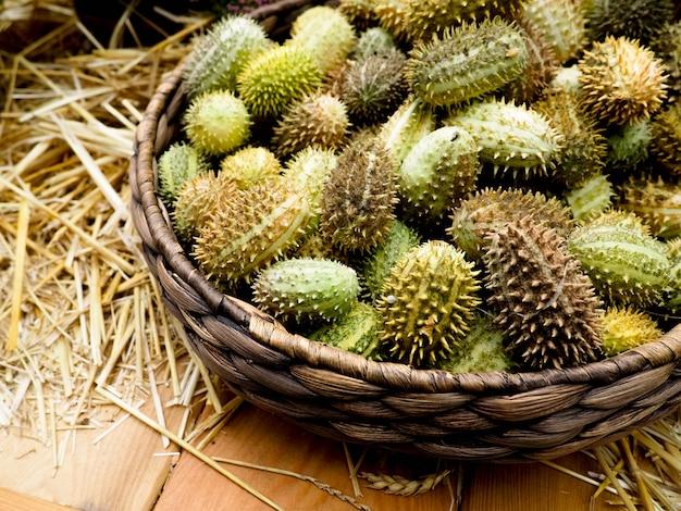 Frutos verdes brilhantes de melothria. pepino exótico da família da abóbora