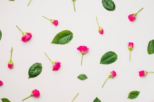 Fúcsia flores e folhas