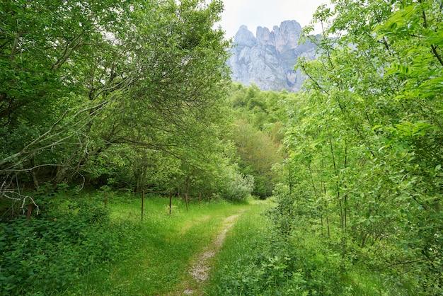 Fuente de montanhas floresta em camaleno cantábria