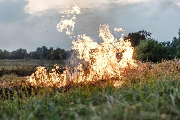 Fumaça e fogo brwon grass está queimando feno seco destrói o ambiente do ar