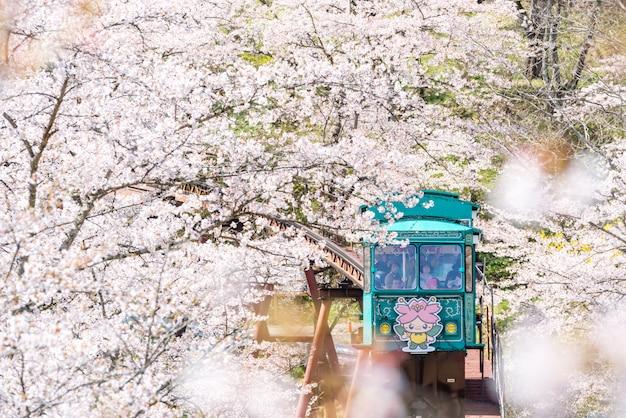 Funaoka, japão - carro de inclinação com a bela flor de cerejeira