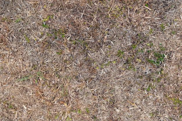 Fundo à terra da grama seca. vista do topo