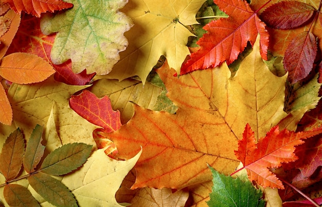 Fundo abstrato colorido e brilhante de folhas caídas de outono