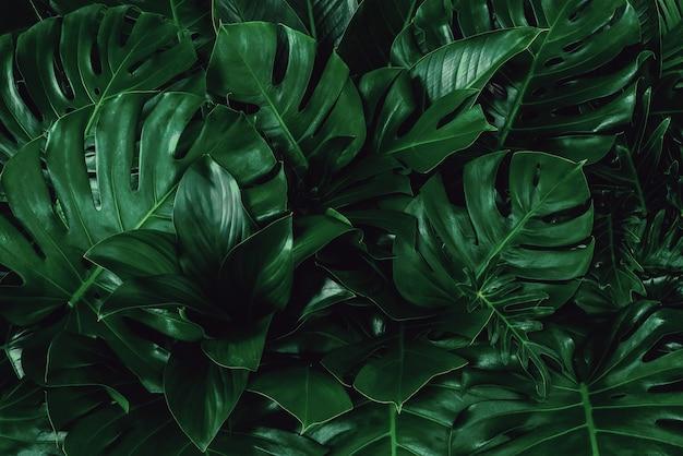 Fundo abstrato com folhas verdes, textura de fundo; layout criativo para design