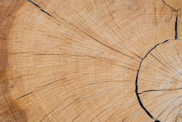 Fundo abstrato como fatia de madeira natural natural.
