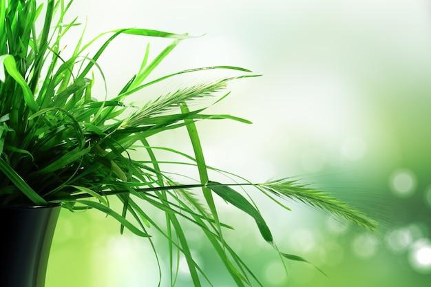 Fundo abstrato da natureza com grama