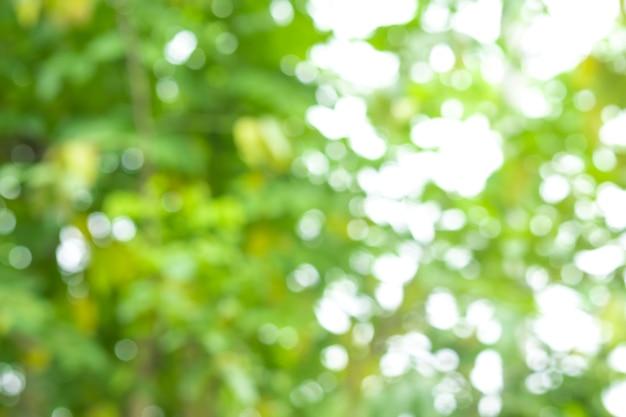 Fundo abstrato da natureza da árvore do borrão do bokeh com luz solar no verão.