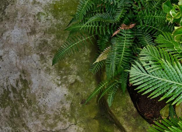 Fundo abstrato da textura com primeiro plano concreto do assoalho e da samambaia