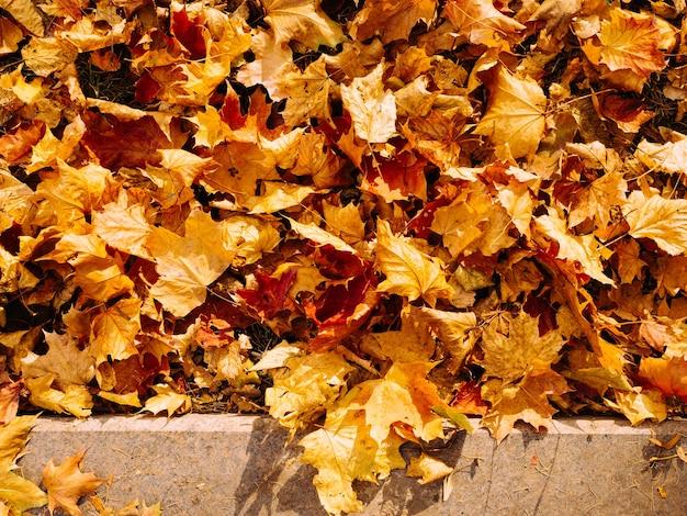 Fundo abstrato das folhas de outono em cor vermelho-amarelado brilhante
