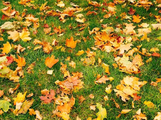 Fundo abstrato das folhas de outono na vista superior da grama verde