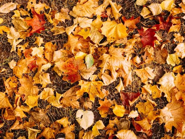 Fundo abstrato das folhas de outono na vista superior de cor vermelho-amarelado brilhante