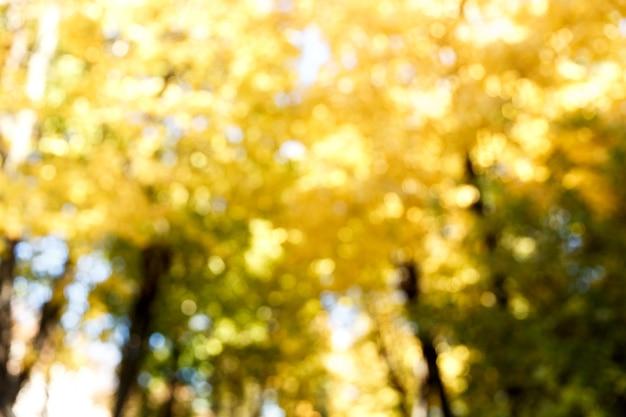 Fundo abstrato do desfoque da floresta de outono