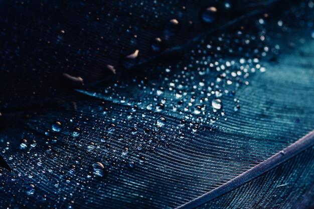 Fundo abstrato macro verde azul escuro com gotas nas penas