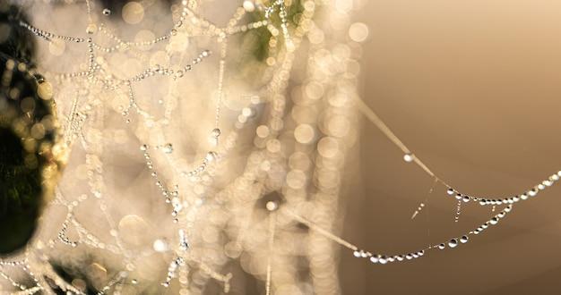 Fundo abstrato natural com gotas de orvalho cristalinas em uma teia de aranha na luz solar.