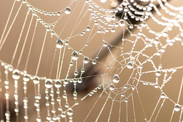 Fundo abstrato natural com orvalho brilhante cai em uma teia de aranha na luz solar.