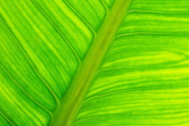 Fundo abstrato natural com textura de folha verde fresca