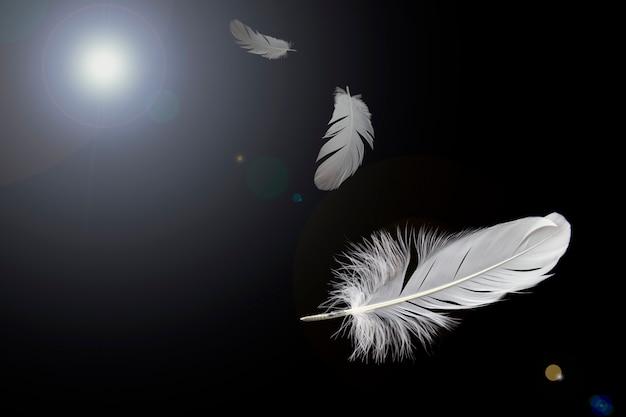 Fundo abstrato, penas brancas que voam na obscuridade.