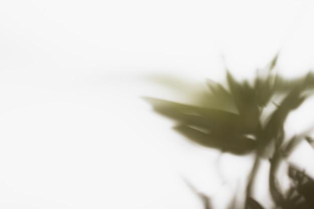 Fundo abstrato sombra de folhas naturais