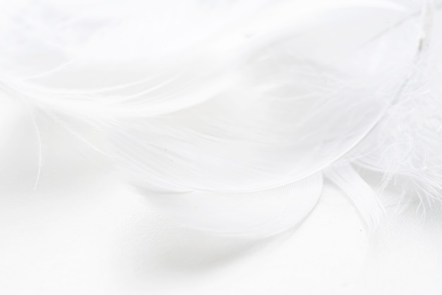 Fundo abstrato. textura. fundo de penas fofas de pássaros em tom pastel
