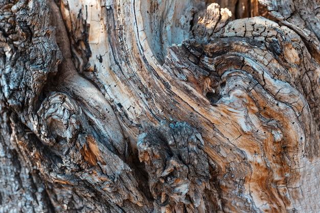 Fundo abstrato texturizado natural da superfície de madeira velha com linhas diferentes.