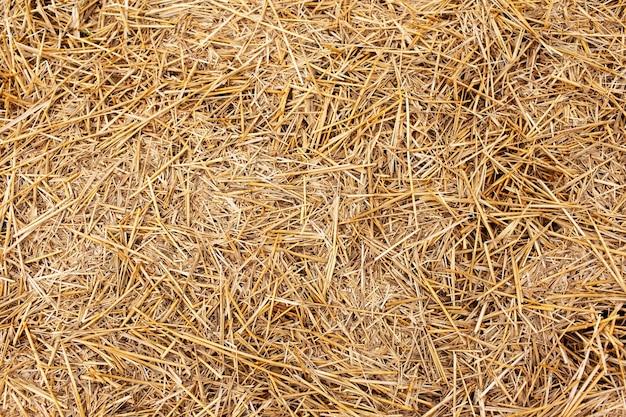 Fundo abstrato texturizado natural de palheiro seco.