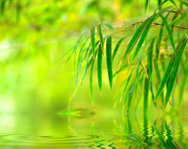 Fundo abstrato verde primavera com folhas de bambu