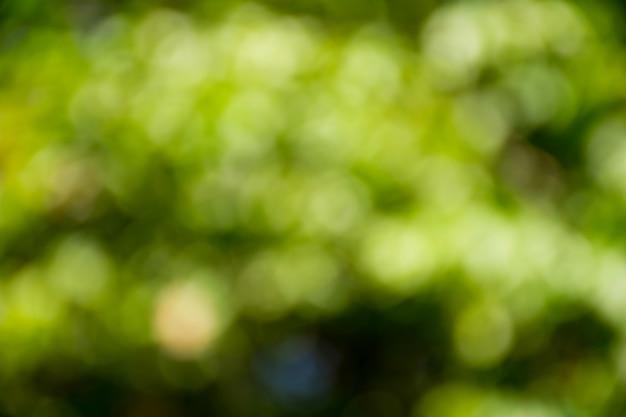 Fundo abstrato verde turva.