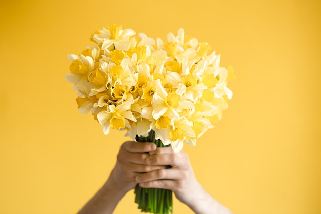 Fundo amarelo e mãos masculinas com um buquê de narcisos amarelos. o conceito de saudações e dia da mulher.