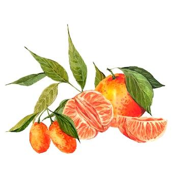 Fundo aquarela com laranjas e tangerinas
