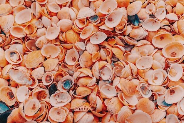 Fundo bonito de conchas na costa do mar