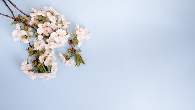 Fundo bonito pastel floral com flores brancas. cartão azul com